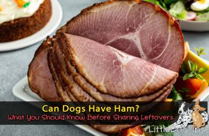 Can Dogs Have Ham?