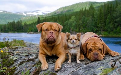 Should I Let My Small Dog Play With Big Dogs?