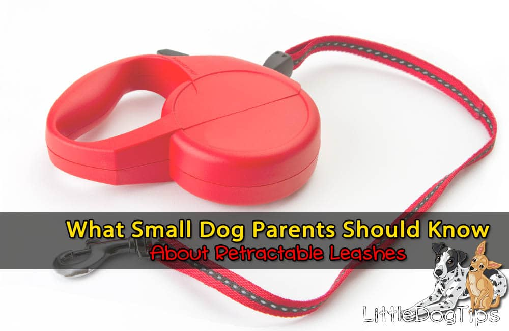 Retractable Leashes For Small and Toy Dogs