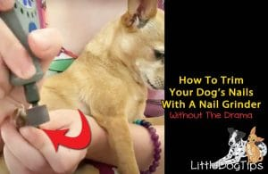 How To Trim Your Dog's Nails With A Nail Grinder Or Dremel Tool