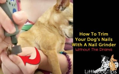 How To Trim Your Dog's Nails With A Nail Grinder… Without The Drama!