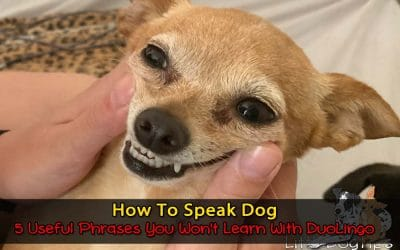 How To Speak Dog – 5 Useful Phrases You Won't Learn With DuoLingo