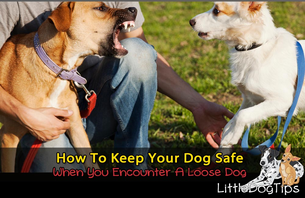 How To Keep Your Small Dog Safe From Loose, Off-Leash, Or Out Of Control Dogs On Walks