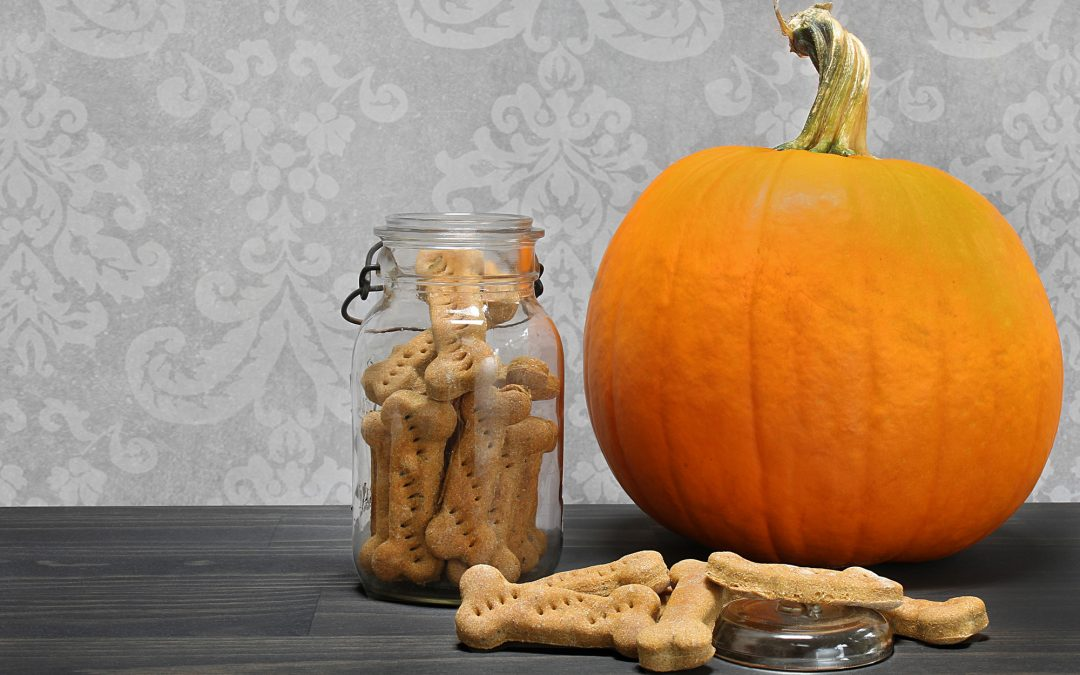 3 Ways To Use Up Leftover Canned Pumpkin For Dogs