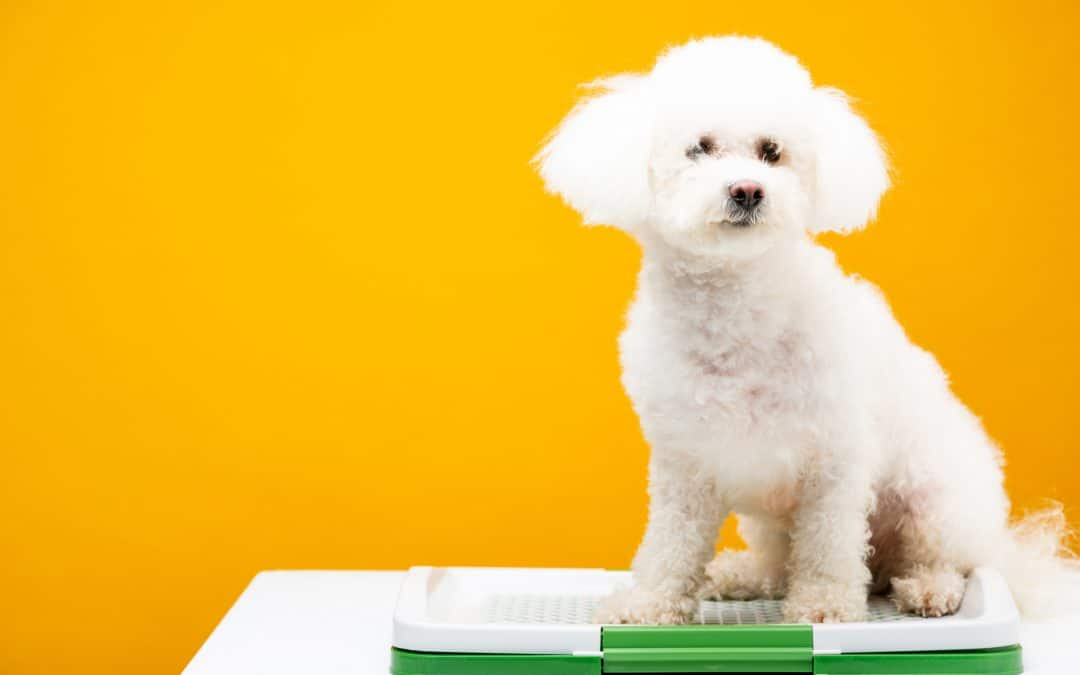 Can A Dog Be Litter Trained?