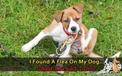 I Found A Flea On My Dog… What Do I Do??
