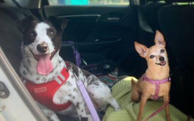 15+ Life Hacks For Chihuahua Parents